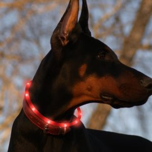 B.Seen LED Dog Collar