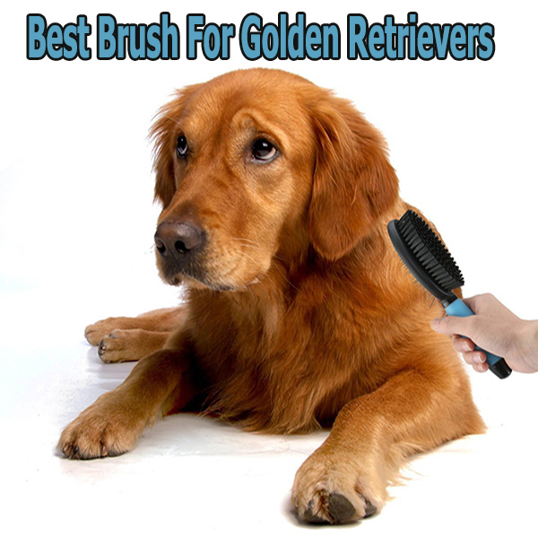 Best Brush For Golden Retrievers