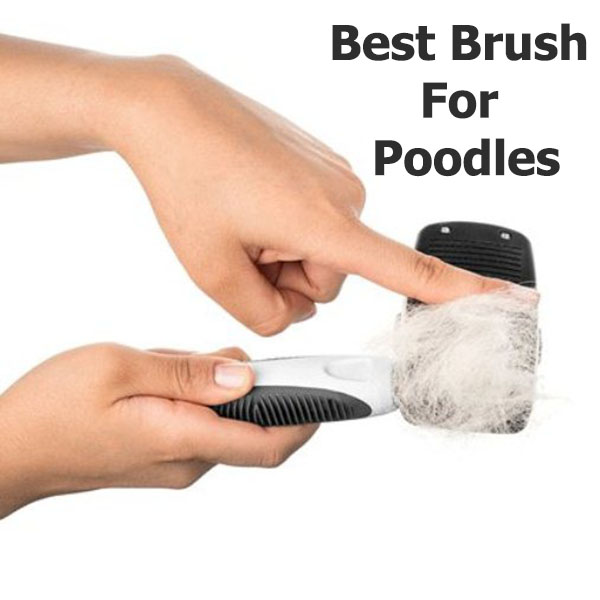 Best Brush For Poodles