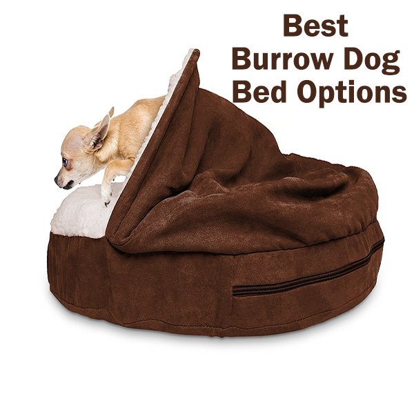 Best Burrow Dog Bed Options