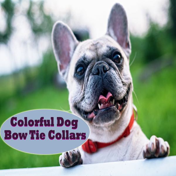 Colorful Dog Bow Tie Collars