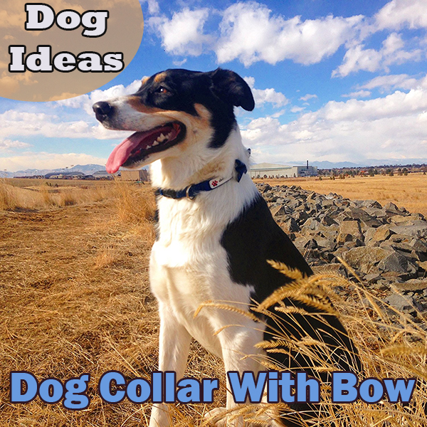 Dog Ideas – Dog Collar With Bow
