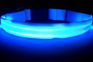 Great-Dealz LED Collar