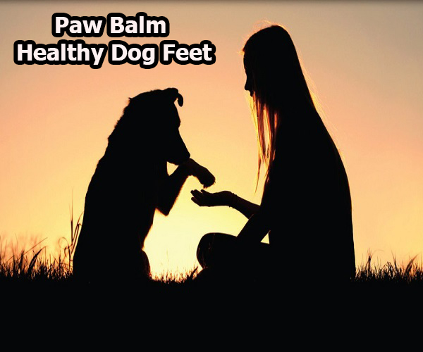 Paw Balm – Healthy Dog Feet