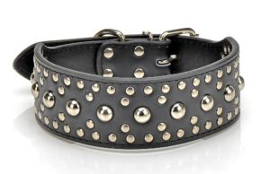 Pet Kingdom Leather Studded Collar