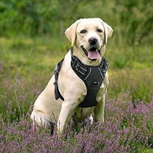Rabbitgoo Front Range Dog Harness
