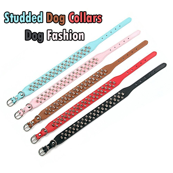 Studded Dog Collars - Fashion